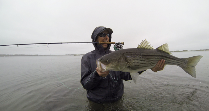 Photos of the day block island beast of a striped bass for Striper fishing ri