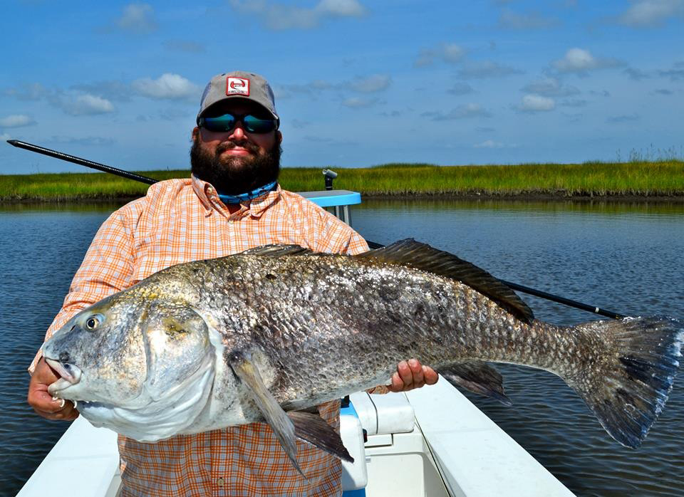Photos banging on the big black drum in louisiana orvis for Black drum fishing