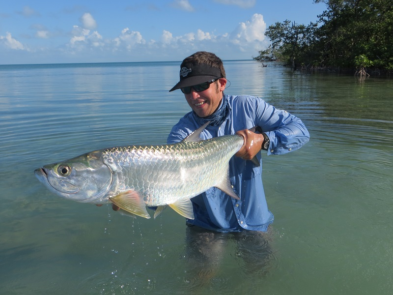 Fish facts tarpon megalops atlanticus orvis news for Tarpon fly fishing