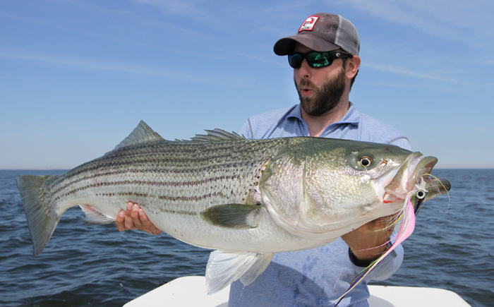 Photos of the day fat jersey stripers on big bunker flies for Nj fly fishing