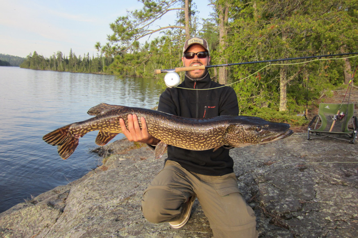 Fish facts northern pike esox lucius orvis news for Orvis fly fishing