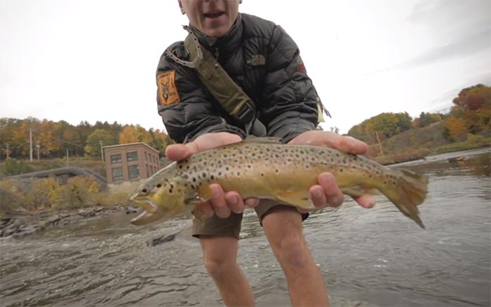 Video fall brown trout in vermont orvis news for Vermont trout fishing