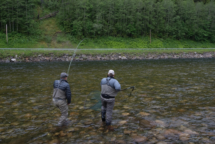 Norway s river of gold the atlantic salmon of the gaula for Fishing reel ringtone