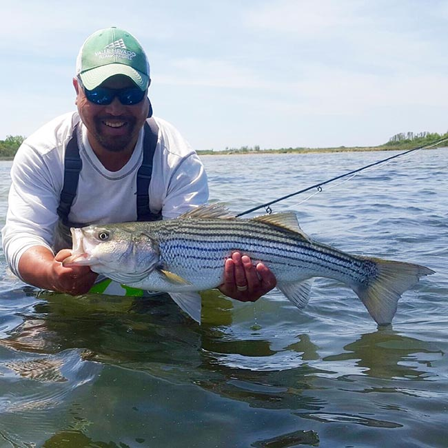 Photos guides on the run for stripers orvis news for Fly fishing shows