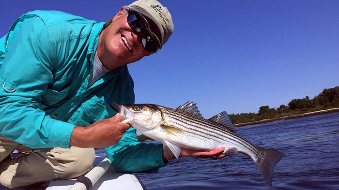 Photos a striper morning on maine 39 s kennebec river for Fly fishing maine