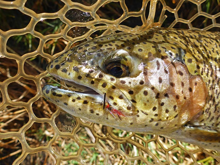 Photos breckenridge beauties of fall orvis news for Fly fishing breckenridge