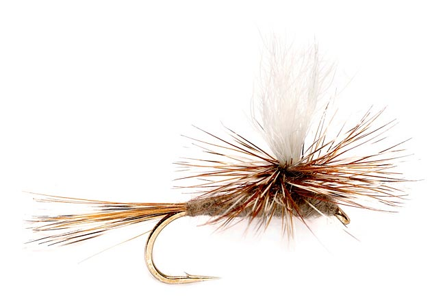 Top 10 flies for fall on colorado freestone rivers take 2 for Best fly fishing in colorado