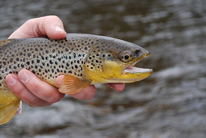 Pro Tips: Top 10 Flies for Winter in the Driftless Area ...