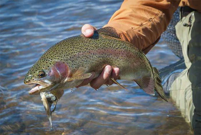 Book Excerpt: How to Fish Streamers for Trout