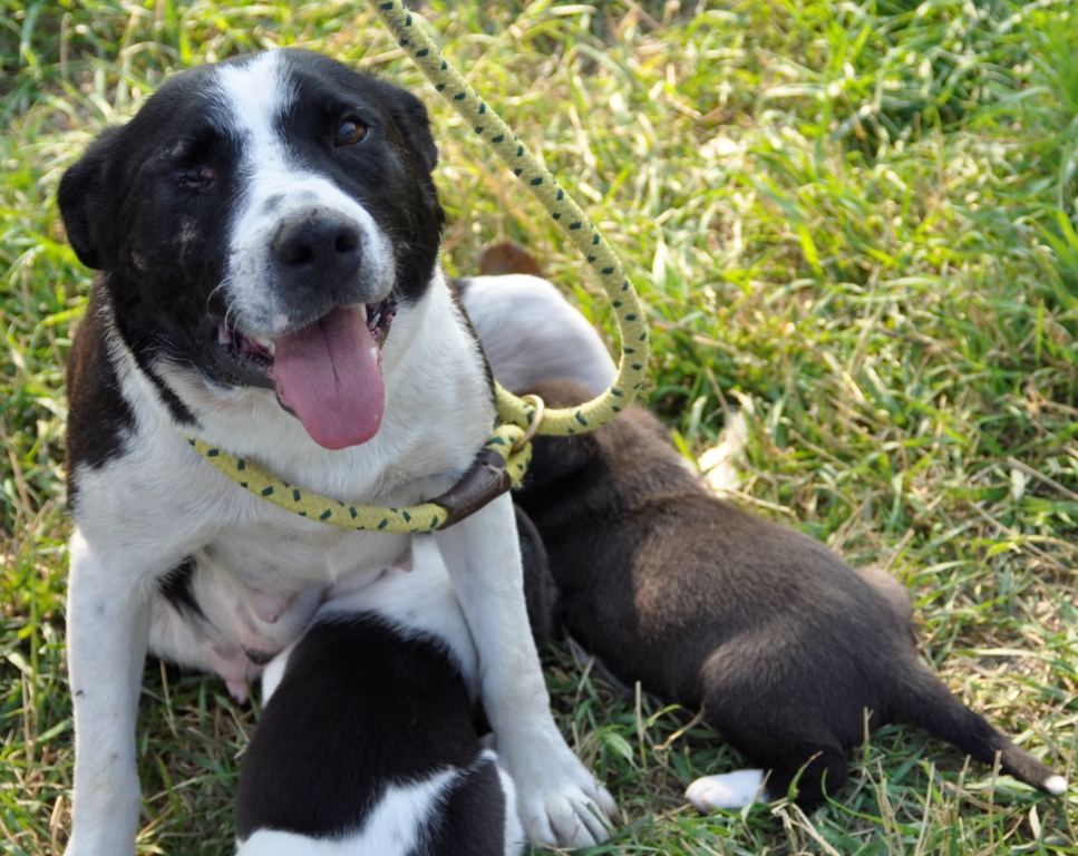 From The Petfinder Foundation A Mothers Love Orvis News