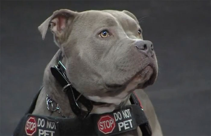 Service Dogs For Sale Sacramento