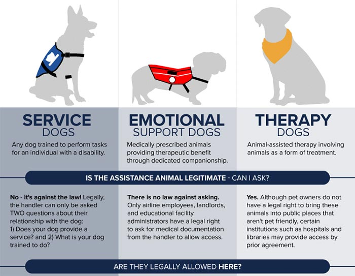 Image of: Therapy Click Here To See The Full Infographic Orvis News Infographic Is That Real Service Dog Orvis News