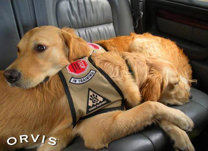 "Who can get a ""Service Dog""? - Orvis News"