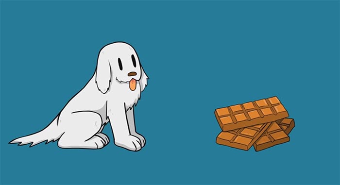 What To Do If Your Dog Eats Chocolate Orvis News