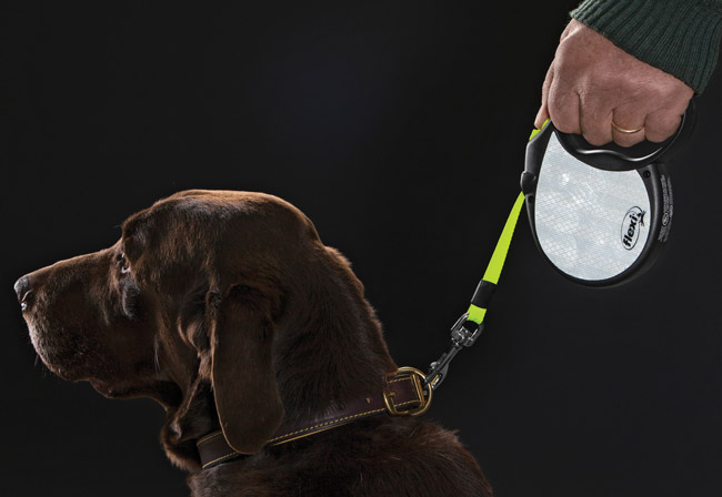How To Leash Train Your Dog Orvis News