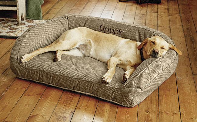 Are Dog Beds Necessary Orvis News