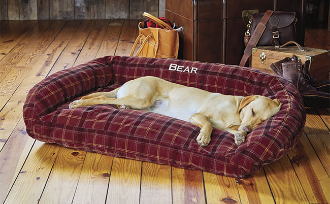 Chewers Gonna Chew: Dog Beds (and more) for the Problem