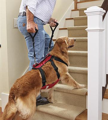 4-elderly-lift-ist-dog-harness - Orvis News