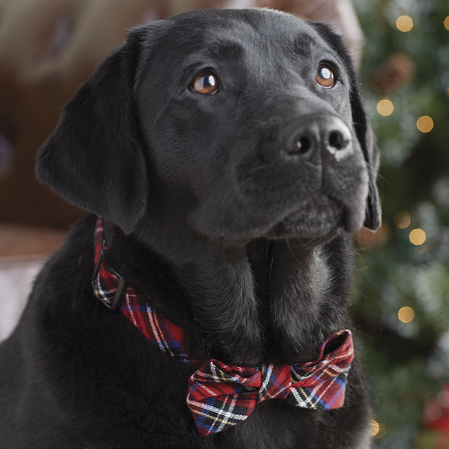 Cute christmas picture ideas for dogs