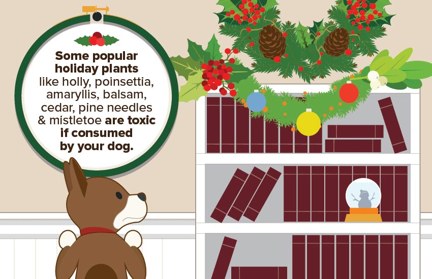 pet_holiday_safety_4
