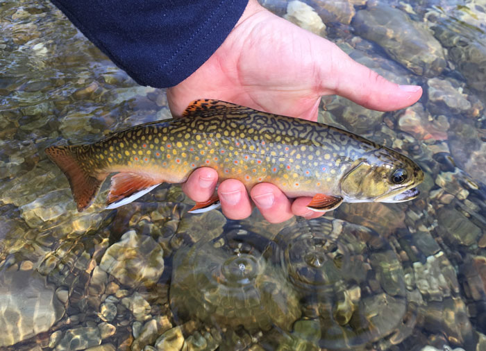 Story and photos you never forget your first love orvis for Vermont trout fishing