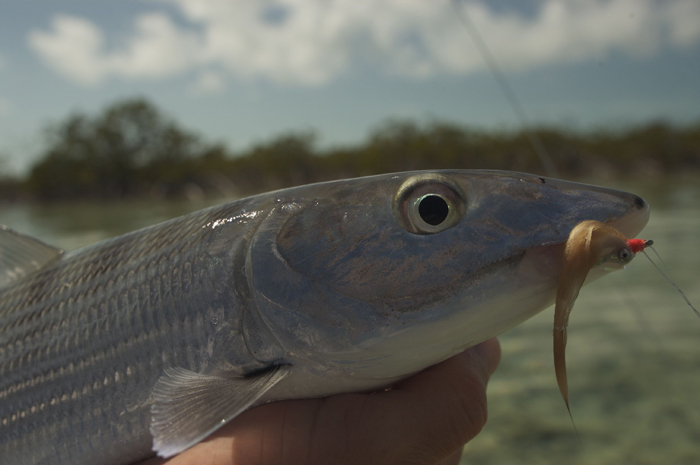 Pro Tips: Keys to a Successful First Bonefish Trip