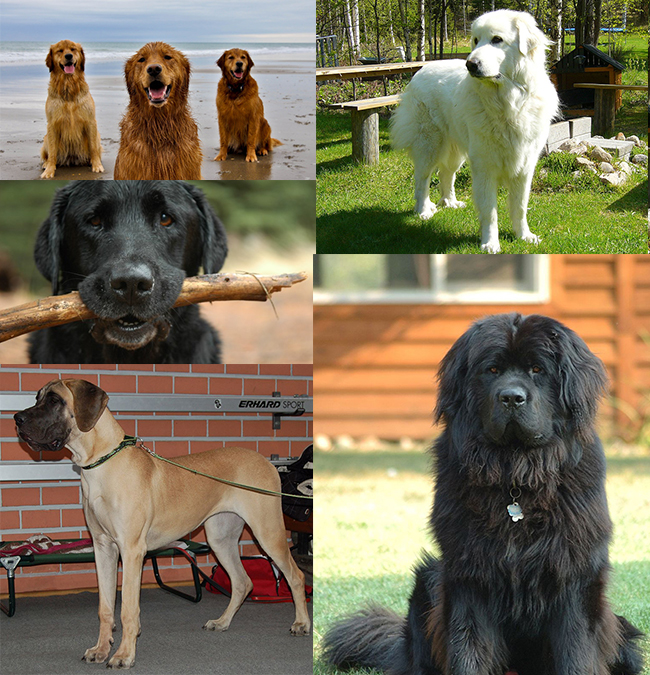Best Big Dogs >> Best Big Dogs For Kids Orvis News