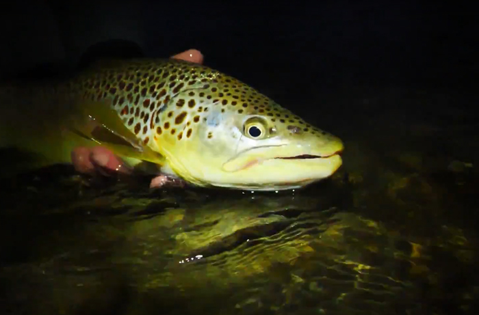Master Class Monday: How to Fish Small Dry Flies in Low Light