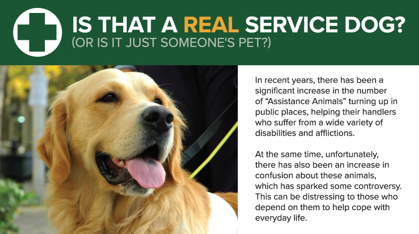 Is That a Real Service Dog? (Or Is it Just Someone's Pet