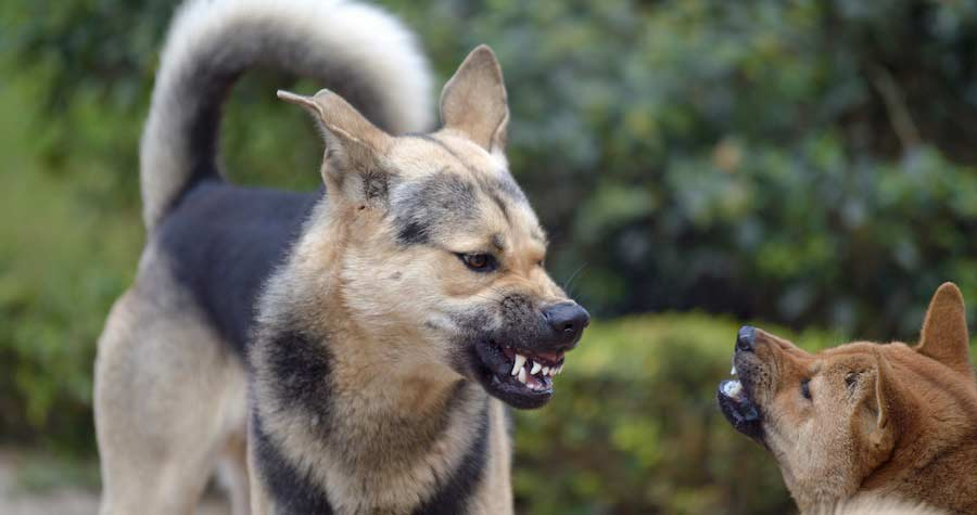 Three Examples Of Real-world Dog Body Language
