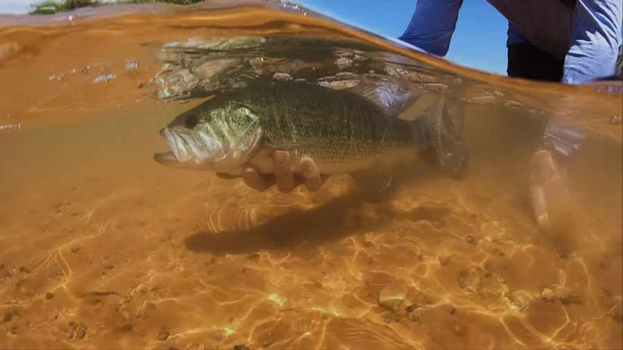 Video: Desert Bass & Bull Bluegills