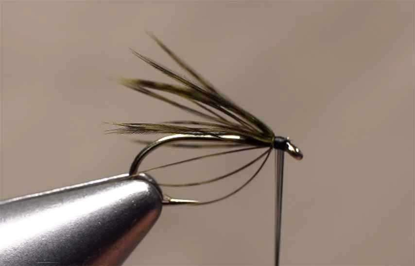 Video: How to Wrap Soft Hackle