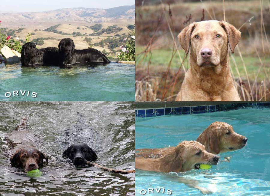 The Best Dog Breeds for Swimming