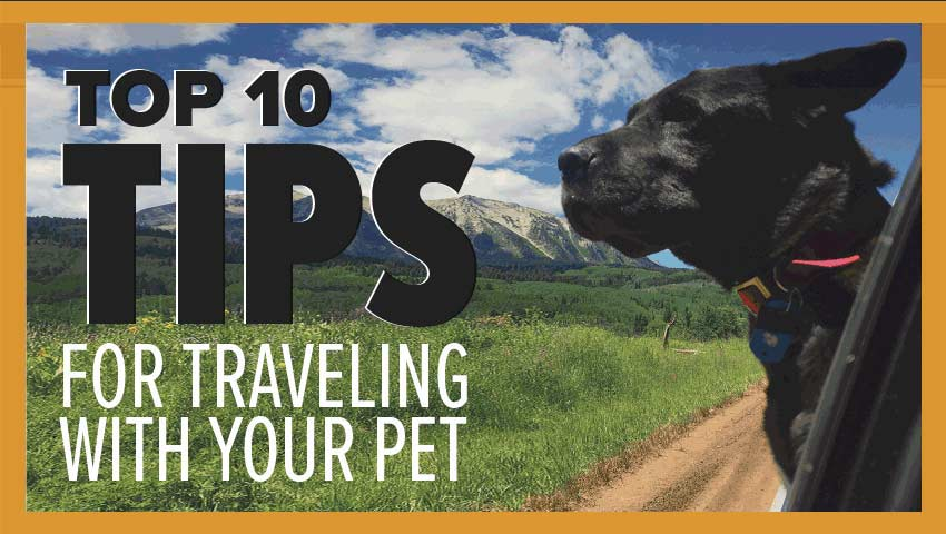 Top 10 Tips for Traveling With Your Dog by Car
