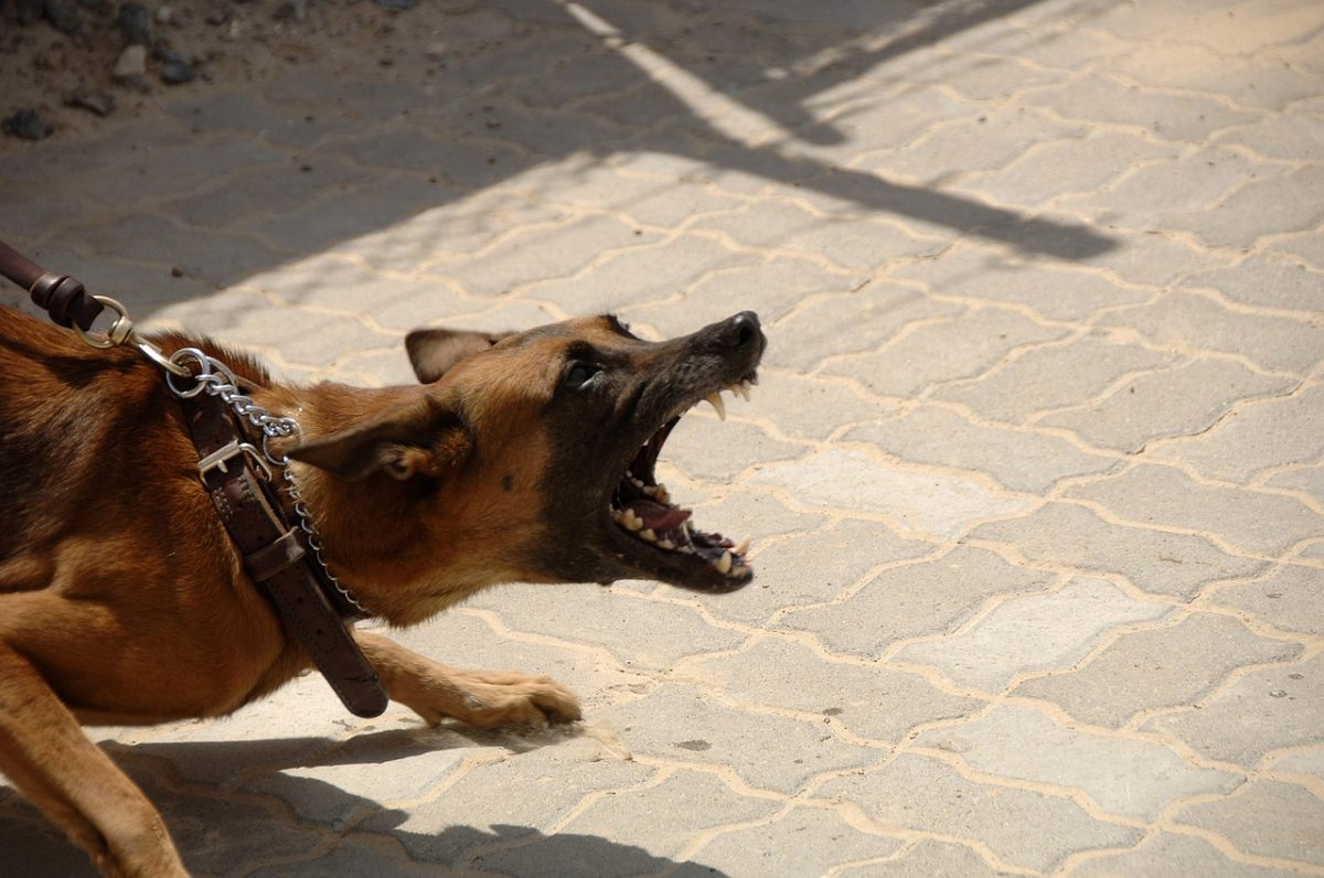 Is an Aggressive Dog a Reflection of its Owner?