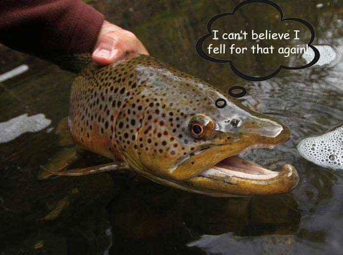 Podcast: How Trout Think, with Dr. Russ Carpenter