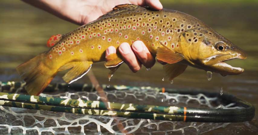 Video: Top 5 Flies for July 2019