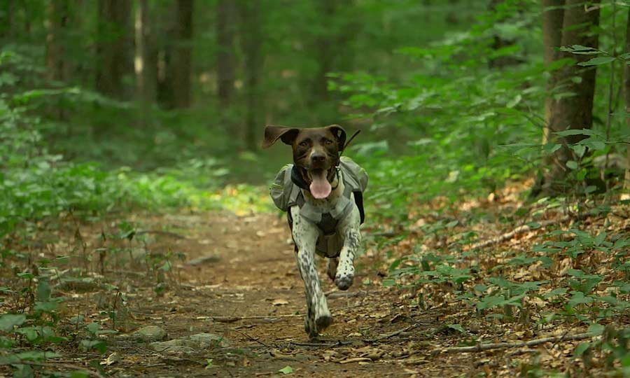 Video Tips: How to Hike with Your Dog