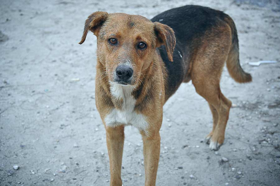 What to Do With a Stray Dog - Orvis News