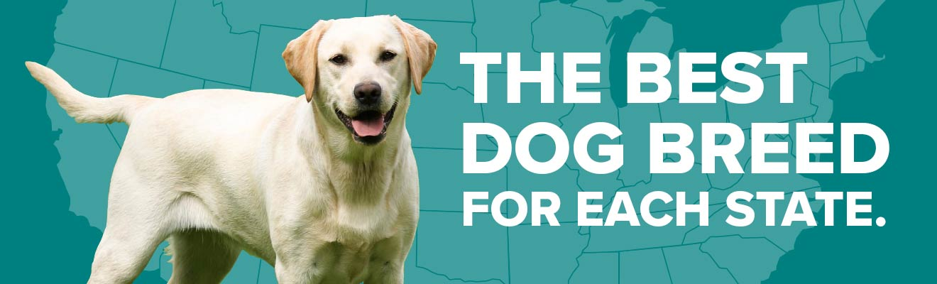 The Best Dog Breed for Each State