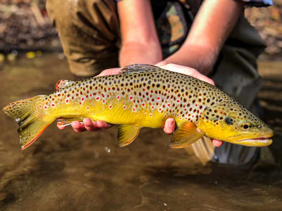 Pro Tips: For Low-Water Trout, Move Slowly and Choose Wisely