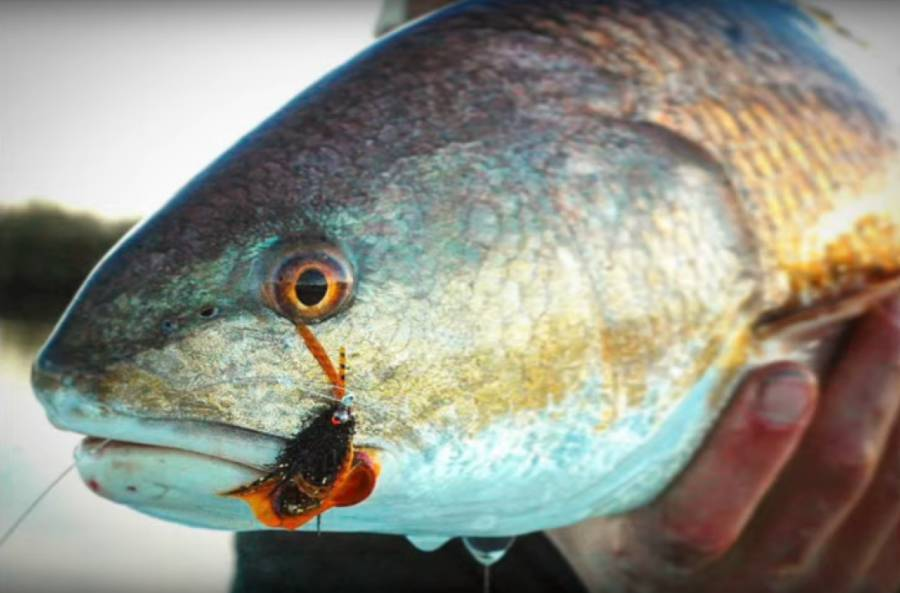 Video Pro Tips: Fly-Fishing for Redfish 101