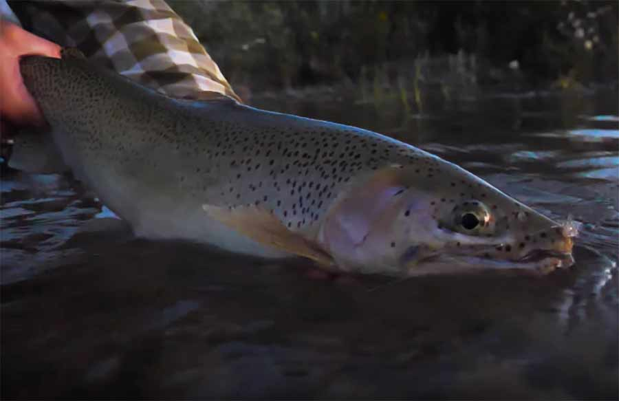 Master Class Monday: How to Find Rising Fish During a Spinner Fall