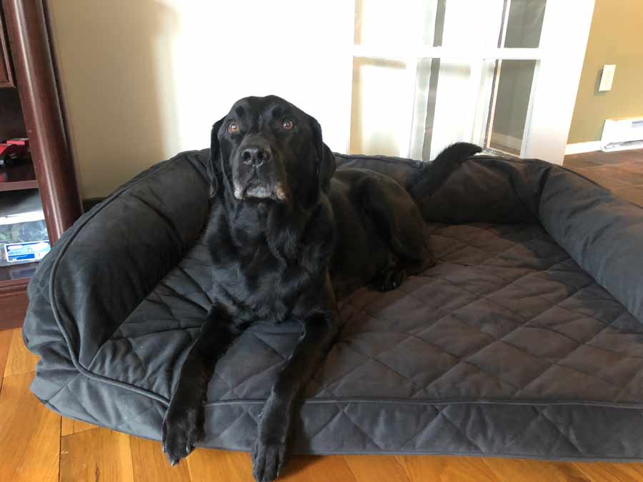 Story and Photos: Ode to a Dog Bed