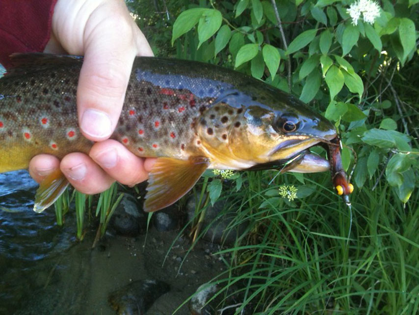 Trout Polyleaders: A Secret Weapon for the Streamer Angler