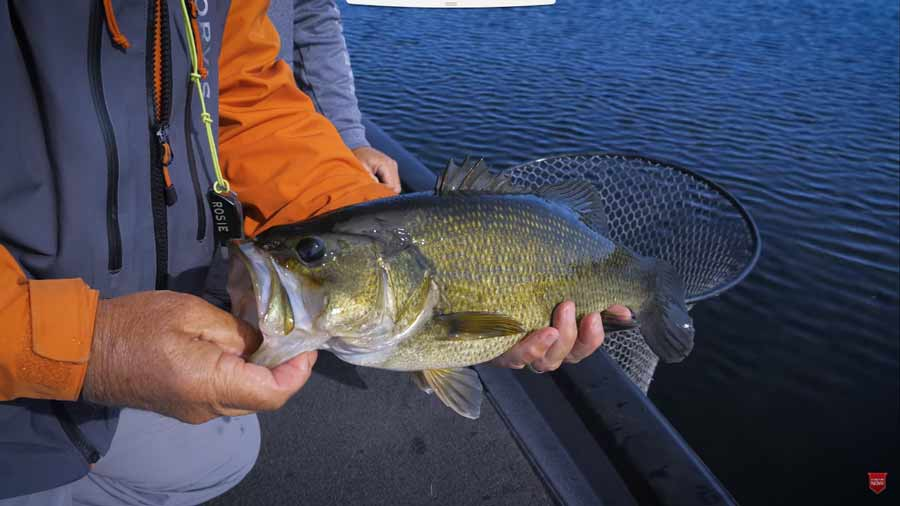 Video: How to Catch Bass on a Fly, with Tom Rosenbauer