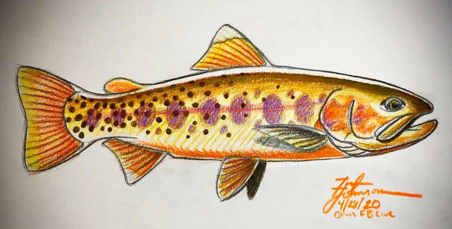 Videos: How to Draw a Trout, with Artist Tim Johnson