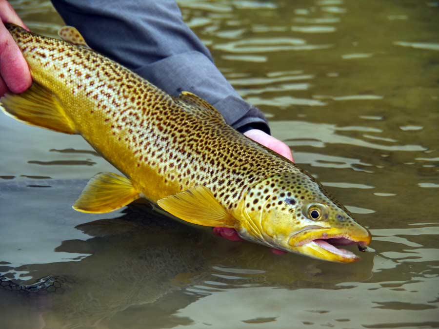 Pro Tips: 10 Secrets for Fishing After a Wet, Cold, Cloudy Change in Weather