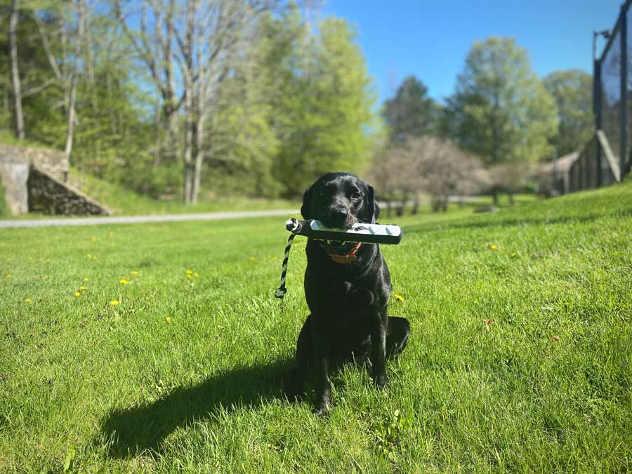 How to Best Work Alongside Your Dog, Part 6: The Retrieve
