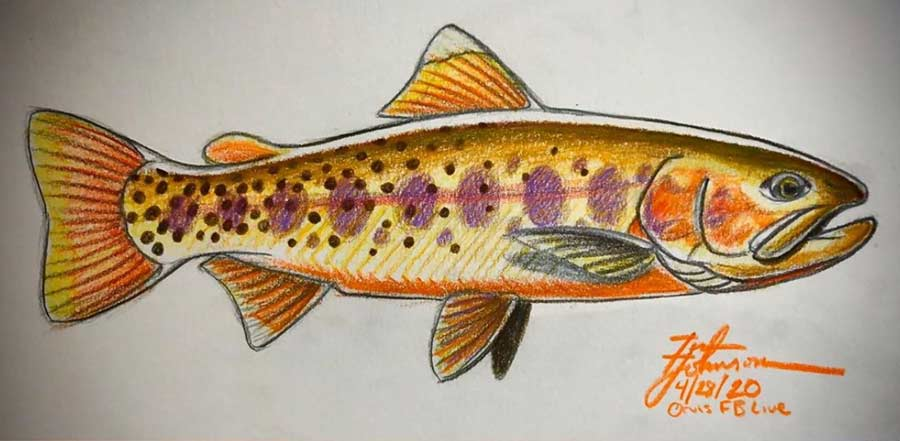 <p></p>Last month, Utah artist Tim Johnson hosted a popular live event on the Orvis Fly Fishing Facebook page in which he taught us how to draw a trout. It was a truly eye-opening lesson that certainly helped me reach new artistic heights. With an artist's . . .